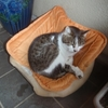 猫ベッドの上の猫。