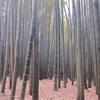たまにはスマホをカバンにしまったままで。鎌倉に住んでる人に聞いたおススメのお寺