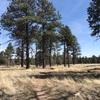 Flagstaff の散歩道