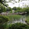 興味の尽きないカイツブリ観察記@井の頭池(撮影日時:2020年5月4日午後)