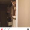 猫を飼うということ