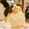 癒しの猫たち♪@有楽町マルイ8階展示スペース