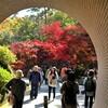 11月14日(木)弥彦神社へ、もみじ谷、菊まつり、侍ニッポンメキシコに勝ったねぇ