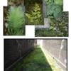 都市における緑を考える!part2