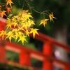 スピッツの「楓」を谷村新司がアツく語っていた件。関ジャニ∞の番組にて【関ジャム】