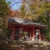 金蔵寺の色付く紅葉を愛でてきた@2020