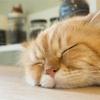 【睡眠負債】休日の寝だめって有効?