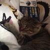 あともう少し。。。それにしても猫はなぜ私の上で寝るのだろうか?