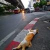 タイ猫の死。少し悲しいバンコクの朝。