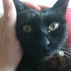 今日の黒猫モモ&白黒猫ナナの動画ー1041