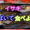 夏が旬のイサキをさばいて食べてみよう【さばき方・食べ方】釣り魚料理・動画