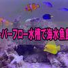 オーバーフロー水槽で海水魚飼育