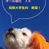 鳥取大学 オール電化 新築アパート 平成31年3月 完成予定!入居者募集開始しました!