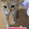 50円のねずみのおもちゃはコスパ良し!(264日目)
