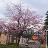 桜はいずこへ・・・