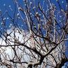 12月の紫木蓮