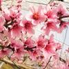 モモ -今日の誕生花-