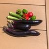 初心者の家庭菜園 2年目 ナス、ピーマン、オクラ収穫