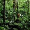 あなたのチームがジャングルで迷ったらどうするか? ~リーダーシップとマネジメントの違い