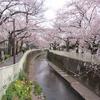 あたら桜の・・・