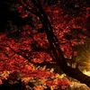晩秋まで楽しめる紅葉の穴場  夜の宇佐神宮境内