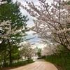 八景島シーパラダイス行った、けど