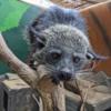 札幌の動物園「ノースサファリサッポロ」がヤバかった件