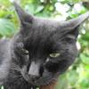 8月前半の #ねこ #cat #猫 その4