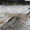 【最強寒波】アメリカにボンボジェネシスが襲来!!サメをも凍りつける極寒な環境!!