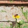 自宅の庭で見かける虫