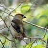 日本 文殊の森公園で5月1日に出会った野鳥たち