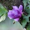 季節の花(令和三年九月)