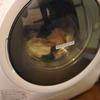 東芝TW-G500ドラム式洗濯乾燥機ZABOONの感想&評価。どうだった?