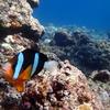【沖縄】沢山のお魚とも泳げる青の洞窟シュノーケリング体験♡