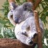 ちょっとお昼寝のつもりが、爆睡。