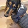 【お散歩が苦手な犬】ポイントは社会化期と匂い嗅ぎ