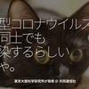 932食目「新型コロナウイルスは、猫同士でも感染するらしい、にゃ。」東京大医科学研究所が発表 @ 共同通信社