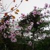 初冬の「まつこの庭」