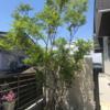 【シンボルツリー下のグランドカバー】低木を組み合わせて常緑・手間いらずな寄せ植えに