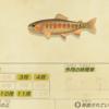 【あつ森】「ゴールデントラウト」の釣れる場所・出現時期・時間帯情報まとめ【あつまれどうぶつの森】