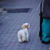 【photo】犬の散歩/Dog-walking