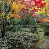京都の秋 もみじ狩り 高桐院 本堂庭園の美しい紅葉