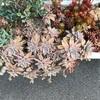 タニサボのお花見