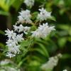 初夏を彩る花 1