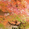 玄関脇の紅葉