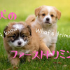 子犬のファーストトリミング