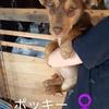 保護子犬「ポッキー」と「リン」に飼い主さんが決まりました🍀