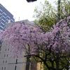 桜咲き始めました