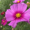 やはり季節を花で感じることはとても大事だと思う。