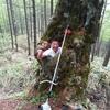 経ヶ岳バーティカルリミットコース整備(2)